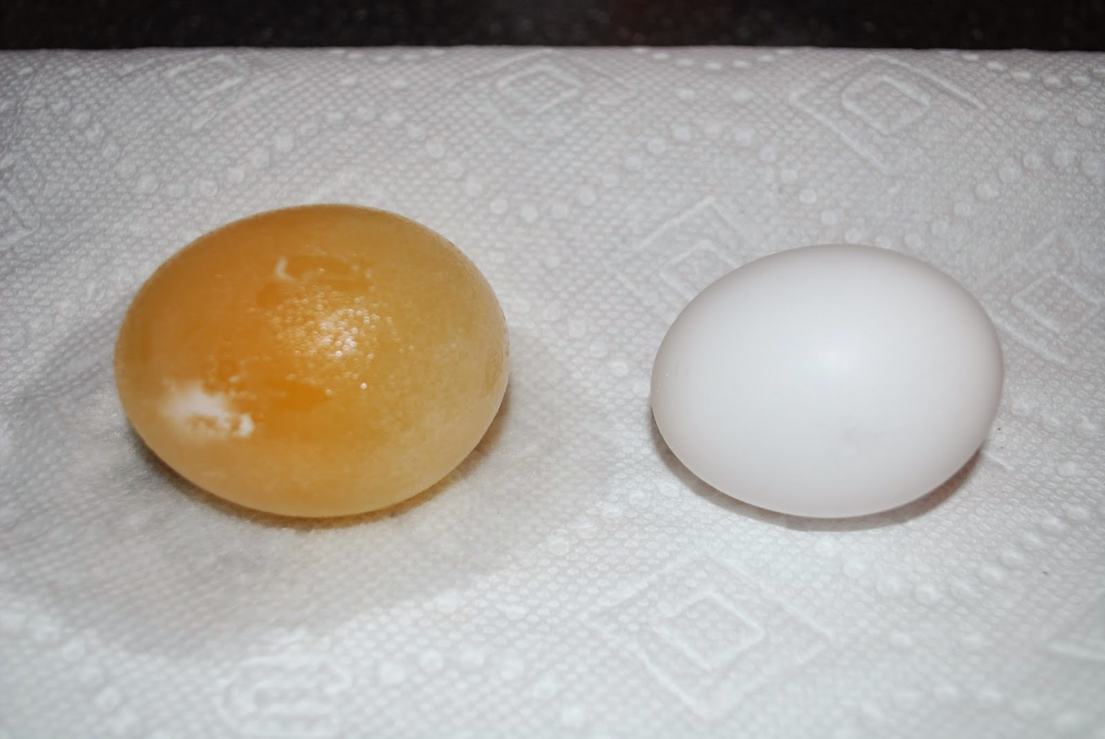 DSC 0348 - Eggmosis - Teaching Selectively Permeable Membranes with Eggs